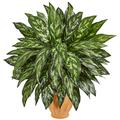 Nearly Natural 29-in. Silver King Artificial Terra Cotta Planter Silk Plants Green
