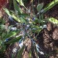 The Holiday Aisle® Beads & Bells Outdoor Yard Art Garden StakeMetal in Blue/Gray, Size 56.0 H x 19.0 W x 19.0 D in | Wayfair