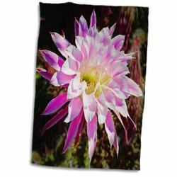 Symple Stuff Decorative Colorful Garden SW Southwest Desert Cactus Classic Flower Abstract Towel Terry in Green/Pink, Size 22.0 H x 15.0 W in