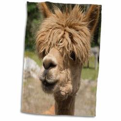 East Urban Home Sapphire Canada, New Brunswick Garden, Barnyard Alpaca in the Petting Zoo Hand Towel Microfiber/Terry/Cotton in Brown | Wayfair