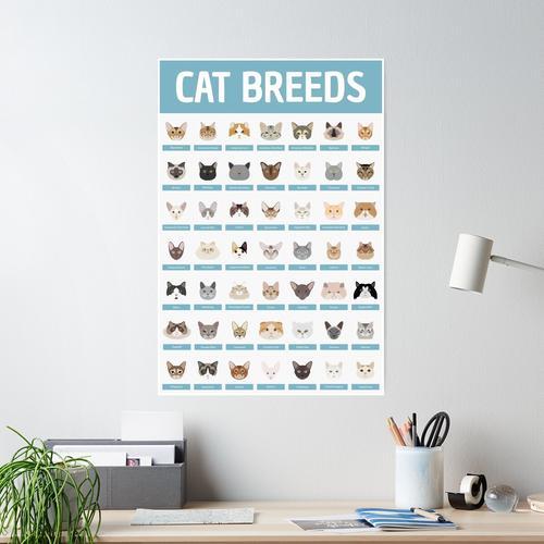Katzenrassen Poster