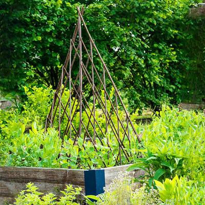 Willow Teepee Plant Support