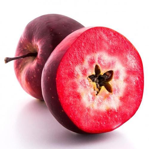 Apfel Vampira, im ca. 23 cm-Topf