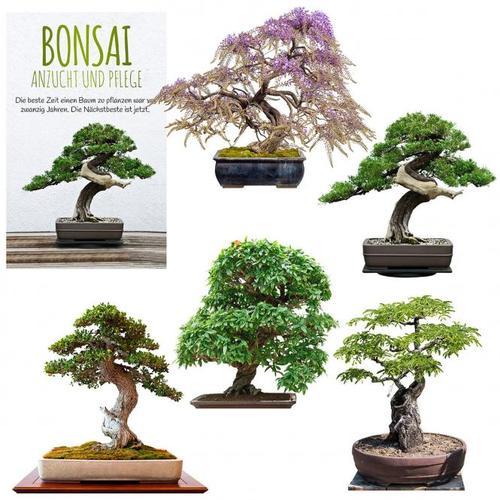 Bonsai Samen Set - Exoten