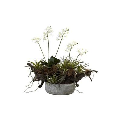 Nearly Natural Green Orchid, Succulent Garden with Driftwood with Decorative Vase