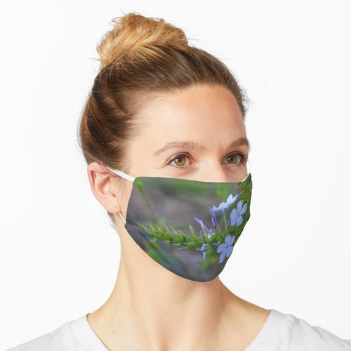 Plumbago blüht Maske