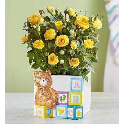 Baby Blocks Playtime Roses Playtime Roses by 1-800 Flowers