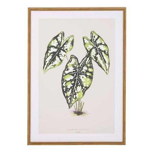 Bild, Pflanze IMPRESSIONEN living grau/grün/braun