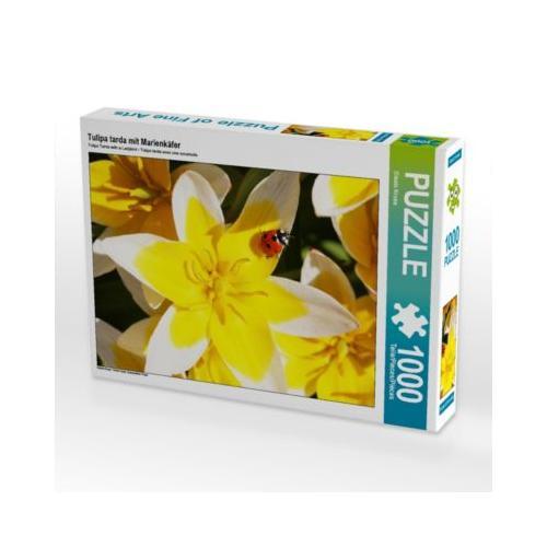 Tulipa tarda mit Marienkäfer Foto-Puzzle Bild von Gisela Kruse Puzzle