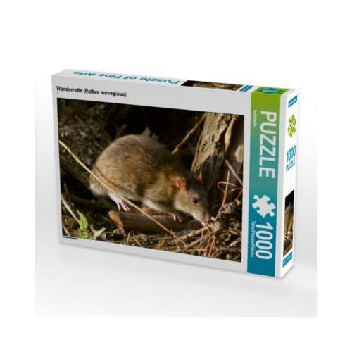Wanderratte (Rattus norvegicus) Foto-Puzzle Bild von Kattobello Puzzle