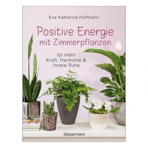 Positive Energie mit Zimmerpflanzen