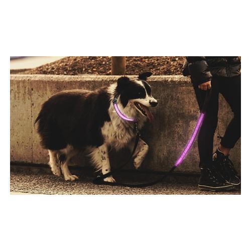 Leuchtendes Hundehalsband: Hundehalsband/ 1x Rosa/ L