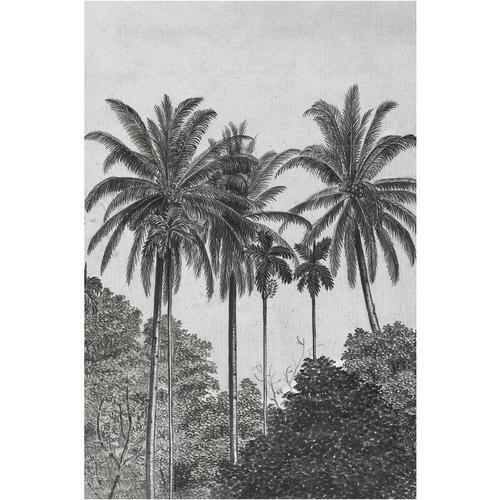 Palmen Fototapete - Grau/Schwarz - Vliestapete - 300x200cm - Graham&brown