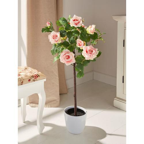 Rosenstamm im Topf Gasper Rosa