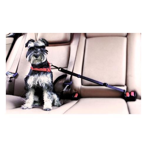 Sicherheitsgurt für Haustiere: 2