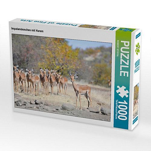 Impalamännchen mit Harem Foto-Puzzle Bild von ROBERT STYPPA Puzzle