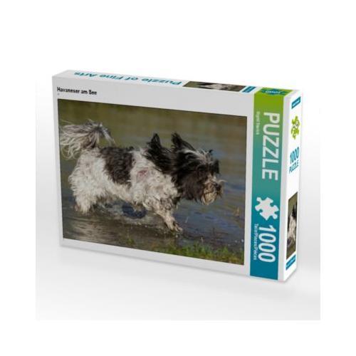 Havaneser am See Foto-Puzzle Bild von SiSta-Tierfoto Puzzle