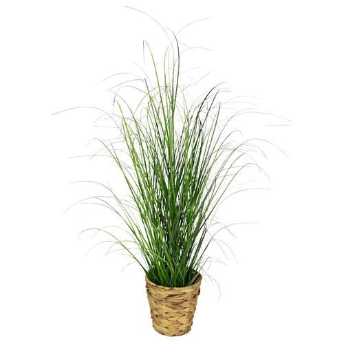 Gras im Topf IGEA Grün