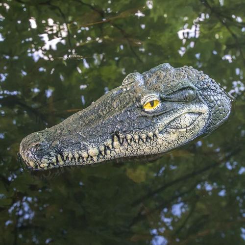 HI Schwimmender Krokodilkopf